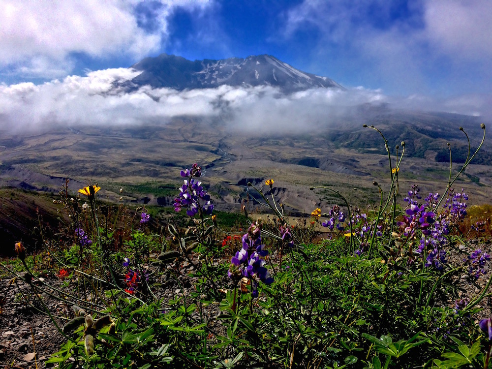 Mount St Helens with flowers