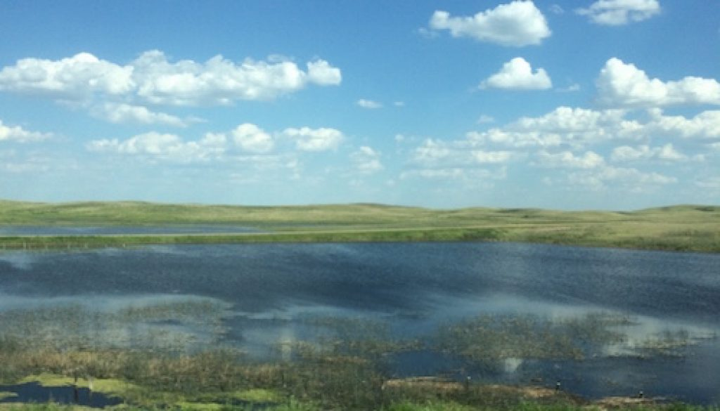 Saskatchewan field with water