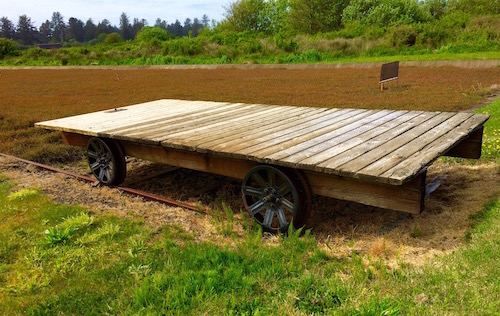 Special rail cart used for hauling bags of cranberries after pruning.